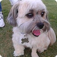Adopt A Pet :: Charlie (formerly Harry) - Las Vegas, NV