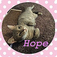 Adopt A Pet :: Hope - Tampa, FL