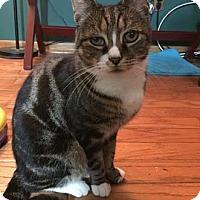 Adopt A Pet :: Augustine - Merrifield, VA