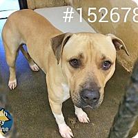 Adopt A Pet :: Jin - Boston, MA