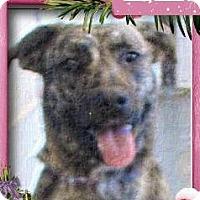 Adopt A Pet :: LEIA - Red Bluff, CA