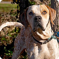 Adopt A Pet :: Jasper - Maryville, TN