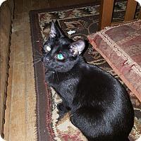 Adopt A Pet :: Mojo - Dewitt, MI