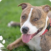 Adopt A Pet :: Joey - Orange, CA