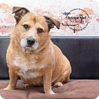 Adopt A Pet :: Mary - Apache Junction, AZ