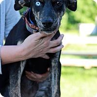 Adopt A Pet :: Sundance - Waldorf, MD