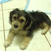 Adopt A Pet :: Baloo - San Ysidro, CA