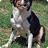 Adopt A Pet :: Roger - Scottsdale, AZ