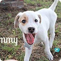 Adopt A Pet :: Tammy - Ocala, FL