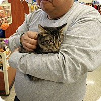 Adopt A Pet :: Ava - Avon, OH