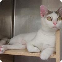 Adopt A Pet :: Olivia - Naperville, IL