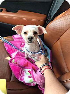 Terrier (Unknown Type, Small) Mix Dog for adoption in Ft. Lauderdale, Florida - Scrappy