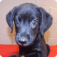 Adopt A Pet :: Zippity - Oxford, MS