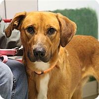 Adopt A Pet :: Brady - Elyria, OH