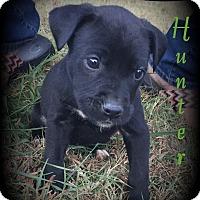 Adopt A Pet :: Hunter - Denver, NC