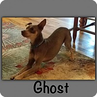 Adopt A Pet :: Ghost - Genoa City, WI
