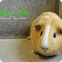 Adopt A Pet :: Lennie - Hamilton, ON