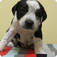 Adopt A Pet :: Peter - Waldorf, MD