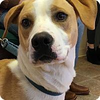 Adopt A Pet :: Charlie - Big Canoe, GA
