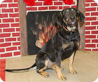 Hound (Unknown Type) Mix Dog for adoption in New Oxford, Pennsylvania - Heather