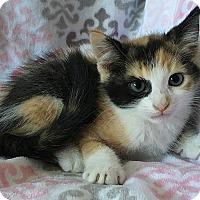 Adopt A Pet :: Ursula - Tampa, FL
