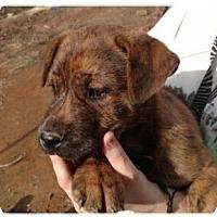 Adopt A Pet :: Cudi - Manchester, NH