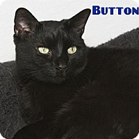 Adopt A Pet :: Buttons - River Edge, NJ