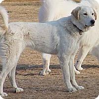 Adopt A Pet :: Tyler Pending Adoption - Tulsa, OK