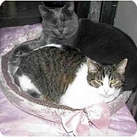 Adopt A Pet :: Fran - Xenia, OH