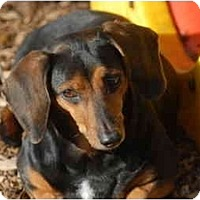Adopt A Pet :: Katie - Ft. Myers, FL
