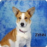 Adopt A Pet :: Zynn - Ft. Myers, FL