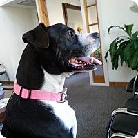 Adopt A Pet :: Bobby - Acushnet, MA