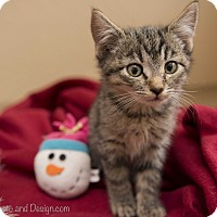 Adopt A Pet :: Sonya - Fountain Hills, AZ