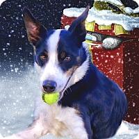 Adopt A Pet :: Jacob purebred - Sacramento, CA