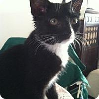 Adopt A Pet :: Dixie - Trevose, PA