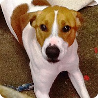 Adopt A Pet :: Layla-PENDING-in Maine - kennebunkport, ME