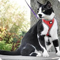 Adopt A Pet :: Mr. Magoo - Dublin, VA