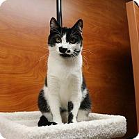 Adopt A Pet :: Pixie - Greensboro, GA