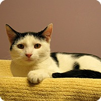 Adopt A Pet :: Unicorn - Milford, MA