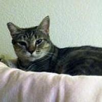 Adopt A Pet :: Portia - Mission Viejo, CA