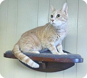 Cat Adoption Sauk Rapids Mn