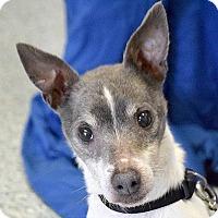 Adopt A Pet :: Toby - Huntley, IL