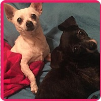 Adopt A Pet :: Sandra Dee and Rizzo - Columbia, MD