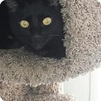 Adopt A Pet :: Ellie - El Cajon, CA
