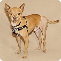 Adopt A Pet :: Tito - Thousand Oaks, CA
