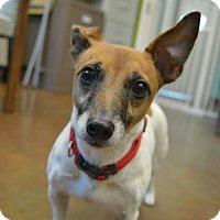 Adopt A Pet :: Dolly Parton - Mebane, NC
