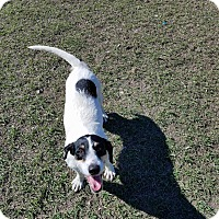 Terrier (Unknown Type, Medium) Mix Dog for adoption in Hammond, Louisiana - Alice