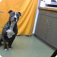 Adopt A Pet :: URGENT 12/5 @ DEVORE - San Bernardino, CA