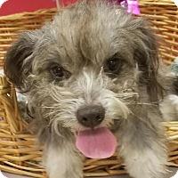 Adopt A Pet :: Whinny - Decatur, AL