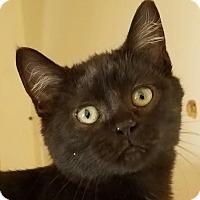 Adopt A Pet :: Merry - Colfax, IA